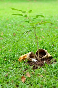 Free Tree Growing With Nutrient Stock Photo - 25355640