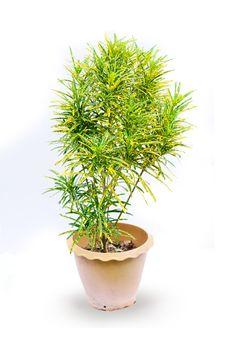 Free Houseplant In Pot Royalty Free Stock Photo - 25355645