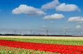 Free Very Large Field Of Tulips And Wind Turbines Royalty Free Stock Photo - 25363255