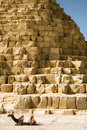 Free Camel On The Background Of The Egyptian Pyramids Stock Photo - 25366540