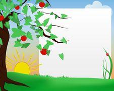 Free Apple Tree Royalty Free Stock Photography - 25361237