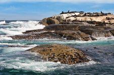 Free Seal Island Royalty Free Stock Photo - 25361465