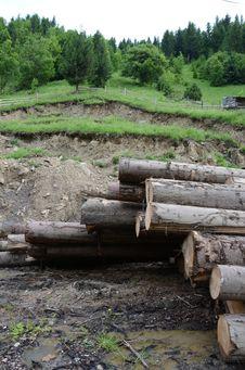 Free Wood Group Stock Photos - 25364843