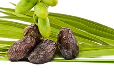 Free Ripe And Unripe Dates On The White Royalty Free Stock Photos - 25365058