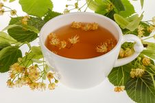 Free Linden Tree Flower Tea Royalty Free Stock Photo - 25366215