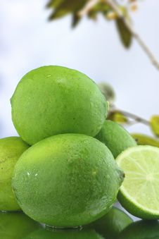 Free Fresh Limes Stock Photo - 25366810