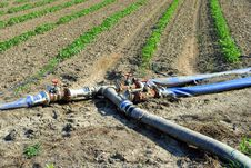 Free Water Pipes Used For Watering Tomatoes Stock Photos - 25367803