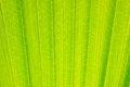Free Leave Palm Tree Stock Photos - 25371523