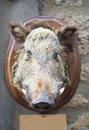 Free Wild Boar Head Stock Photos - 25378403