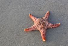 Free Starfish Stock Photography - 25371432