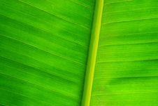Free Banana Leaf Stock Image - 25371701