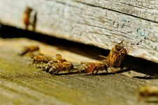 Free Bees At The Entrance. Stock Photography - 25375552