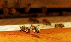 Free Bees At The Entrance. Royalty Free Stock Images - 25375559