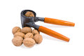 Free Nuts Stock Photography - 25385412