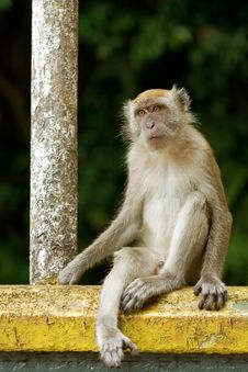 Free Monkey Sitting At A Railing Royalty Free Stock Images - 25381099