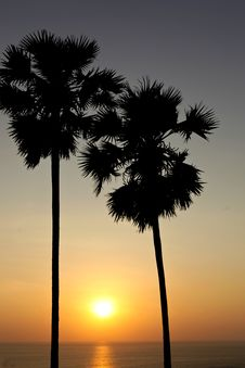 Free Palm Trees Silhouette At Sunset Royalty Free Stock Image - 25383126