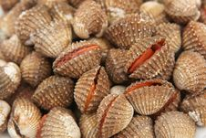 Free A Fresh Cockles At A Market Stock Photography - 25383142