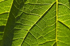 Free Close-up Of A Leaf Royalty Free Stock Images - 25384099