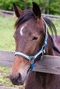Free Horse Royalty Free Stock Image - 25390936