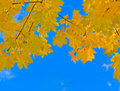 Free Autumn Leaves Stock Photography - 25393202