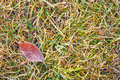 Free Frost Covered Leaf On A Grassy Background Royalty Free Stock Images - 25394029