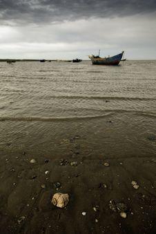 A Shell On The Beach Stock Photos