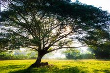 Free Big Tree S Branches With Fresh Leaves Royalty Free Stock Photo - 25392075