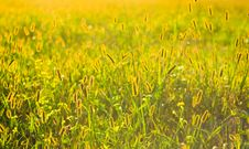 Free Fresh Grass On Meadow Stock Image - 25393831