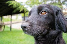 Free Black Dog Close Up Stock Photography - 25394502