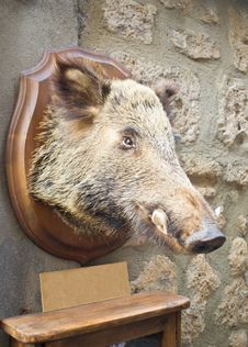 Free Wild Boar Head Outline Royalty Free Stock Photography - 25394627