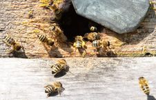 Free Entrance To The Old Hive Stock Photos - 25397163