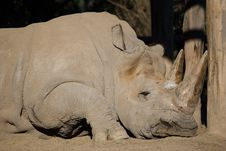 Free White Rhinoceros Sleeping Stock Photography - 25397362