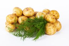 Free Potatoes Stock Photo - 25399160