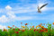 Free Colorful Flowers Over Blue Sky Stock Photography - 25392012