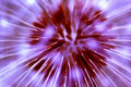 Free Purple Dandelion Stock Image - 2549161