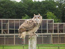 Free Eagle Owl Stock Photos - 2540263