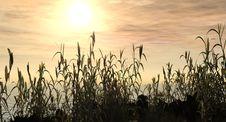 Free Water Grass Stock Image - 2541821