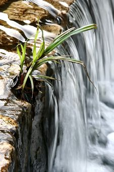 Free Plant On Edge Of Waterfall Stock Images - 2541954