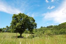 Free Tree In Rural Settings Stock Photography - 2543532
