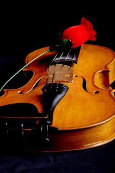 Free Rose Melody Stock Photography - 2545382