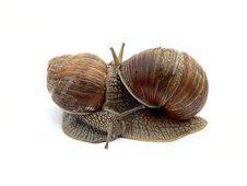 Free Two Snails Royalty Free Stock Photo - 2546545