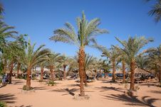 Free Palm Sand Beach Stock Images - 2546654