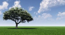 Free Green Tree Royalty Free Stock Photo - 2547805