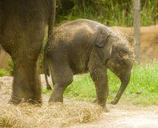 Free Baby Elephant Stock Image - 2549541