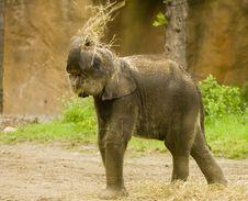 Free Baby Elephant Stock Photography - 2549552