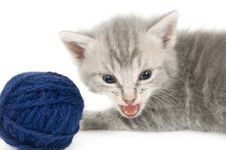Free Gray Kitten And Blue Yarn Stock Photography - 2549562