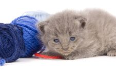 Free Tired Kitten And Ball Of Yarn Stock Photos - 2549573