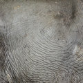 Free Elephant Skin Texture Royalty Free Stock Photography - 25401477