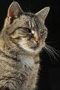 Free Posing Domestic Female Cat Royalty Free Stock Photo - 25409665
