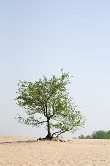 Free Lonely Tree Royalty Free Stock Photography - 25404867